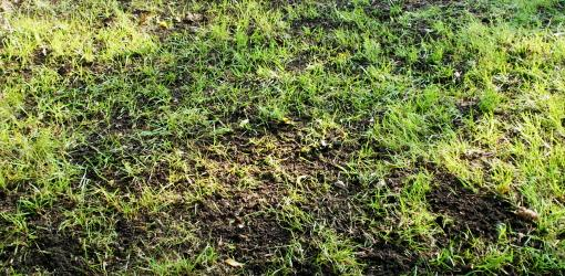Top Dressing To Improve The Soil In Your Lawn Today S