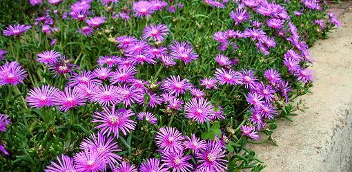 Perennial Flower Garden Basics Today S Homeowner