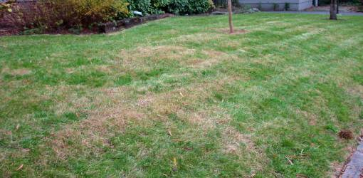 Help For Fertilizer Burn In Lawn Grass Today S Homeowner