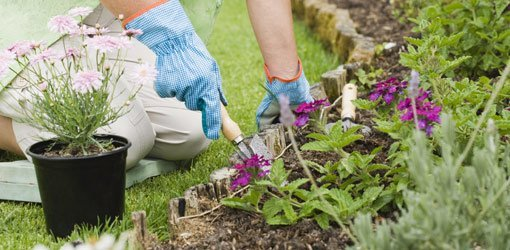 Gardening On A Budget Today S Homeowner