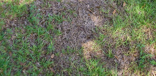 How To Deal With Grass Fungus Diseases In Your Lawn
