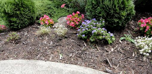 Does Wood Mulch Attract Termites And Other Insects