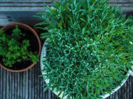 plants inside planters