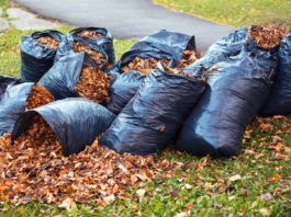 Bags of leaves in a yard
