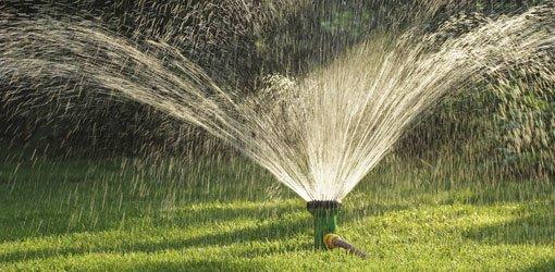 Sprinkler watering lawn.