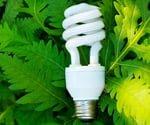 Eco-friendly CFL light bulb on green ferns.