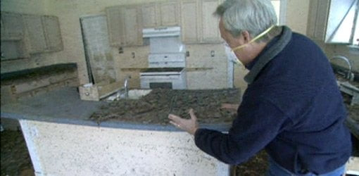 How To Prevent And Remove Mold In Your Home Today S