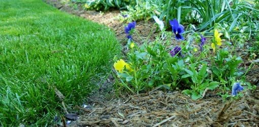 Mulch in a flower bed