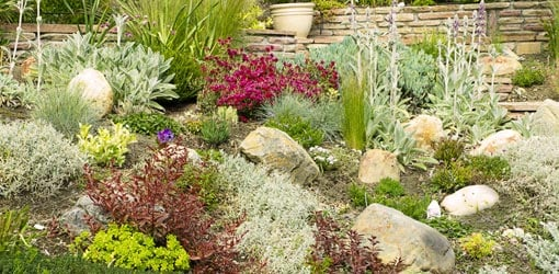 Landscaping with Drought-Tolerant Plants | Today's Homeowner