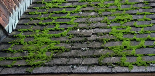 How To Remove Moss From A Roof Today S Homeowner