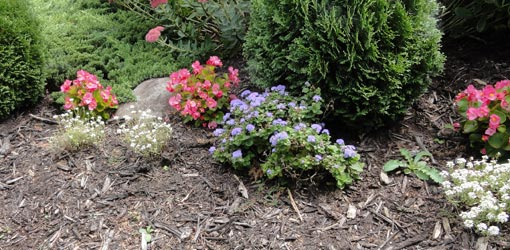Flower bed with mulch.
