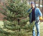 Joe Truini with Christmas tree.
