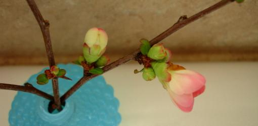 Tree branch blooming indoors in a vase.