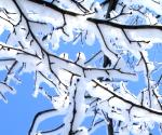 Snow on bare tree branches.