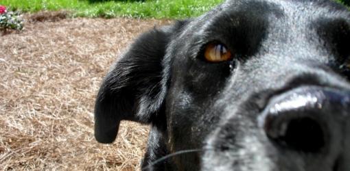 Dog in yard.
