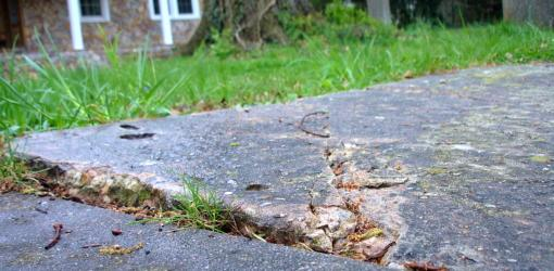Sidewalk Damaged by Tree Roots | Today's Homeowner