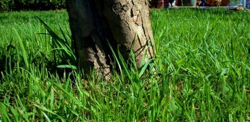 Tree trunk in yard.