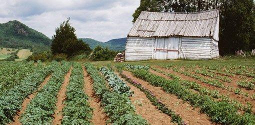 Tips For Planning Your Vegetable Garden