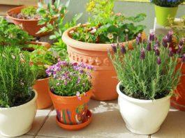 Container garden flower pots