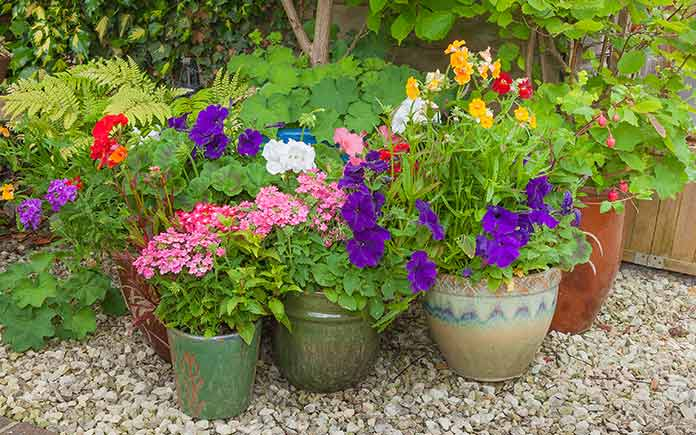 Container Gardening How To Grow Flowers In Pots Today S Homeowner
