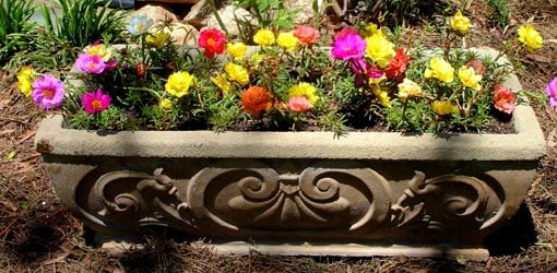 Flower Containers For Beginners Today S Homeowner