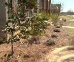 environmentally firendly landscaping