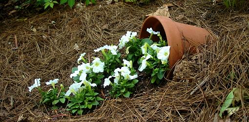 How To Create A Spilled Flower Pot Today S Homeowner