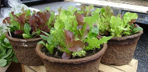 How To Plant A Fall Vegetable Garden