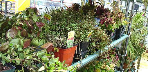 How To Buy End Of Season Bargain Plants Today S Homeowner