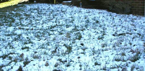 winterized lawn