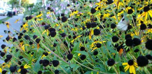 seed plants birds produce garden seeds