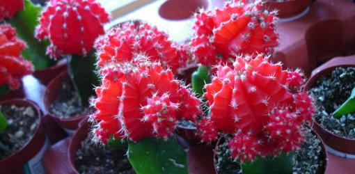 How To Encourage Cactus To Bloom | Today's Homeowner