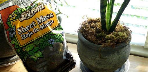 How To Dress Up Your Houseplants With Mulch Today S Homeowner