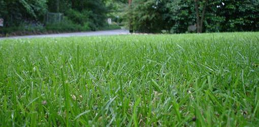 How To Have A Weed Free Lawn Today S Homeowner