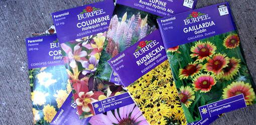 packets of flower seeds