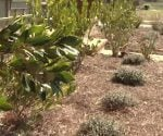 landscape your yard with indigenous plants