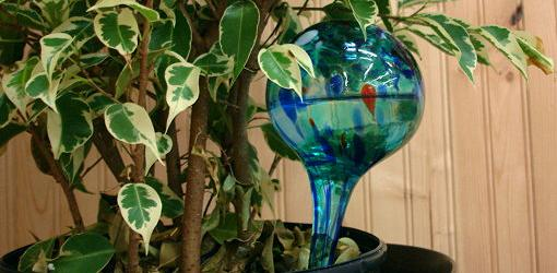 Aqua Globe being used on houseplant