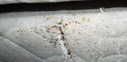 5 Steps To Get Rid Of Bed Bugs Today S Homeowner