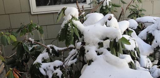 Frozen shrub