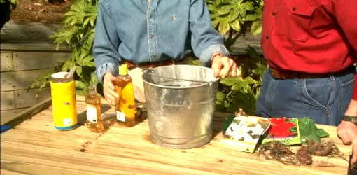 Mixing up protective solution for flower bulbs