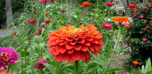 Blooming flowers in garden.