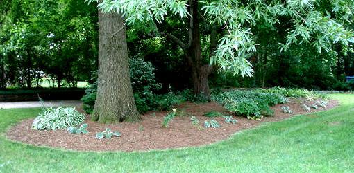 Plantings under trees