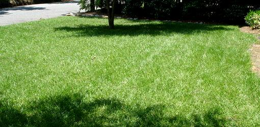 Green lawn in full sun