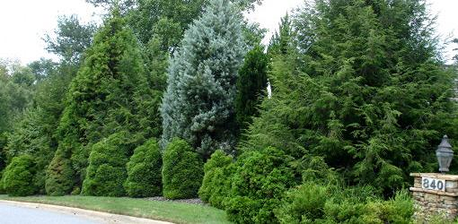 Trees and shrubs form windbreak in yard