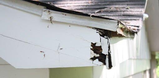 Rotten fascia board on eaves.