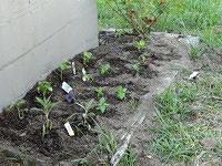 Herb garden planted