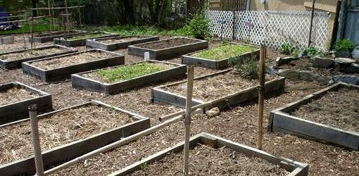 Mix rich soil with the existing subsoil in a raised bed garden