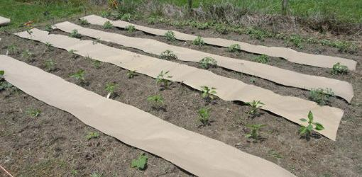How To Weed Proof A Vegetable Garden Today S Homeowner