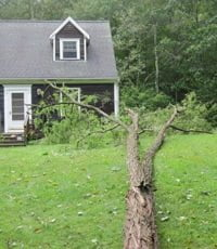 Tree blown over by Hurricane Irene near house