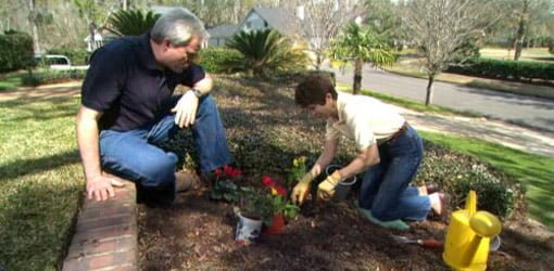 Planting container grown flowers in a yard